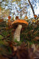Herbst in der Heide - 4