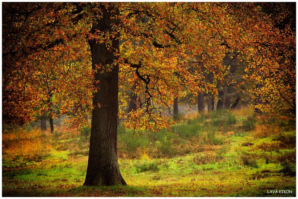 Herbst in der Heide