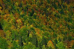 Herbst in der Höllentalklamm