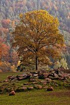 Herbst in der Pfalz