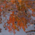 Herbst in der Pfütze