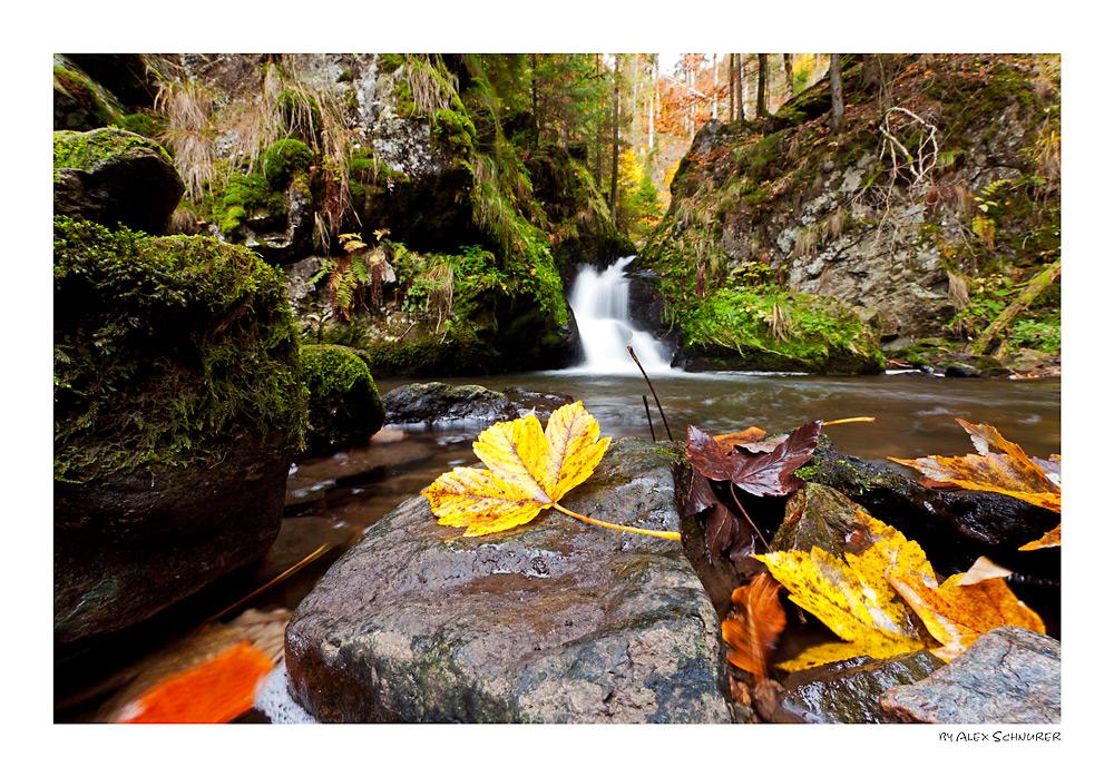 Herbst in der Ravennaschlucht