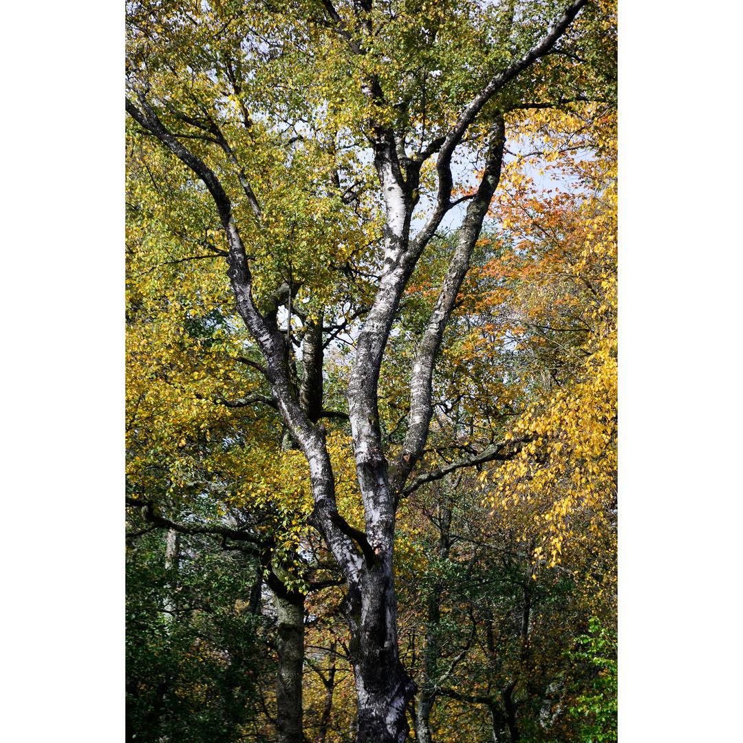 Herbst in der Rhön
