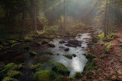 Herbst in der Saußbachklamm