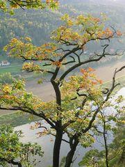 Herbst in der Schweiz (der Sächsischen)