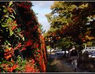 Herbst in der Stadt 3
