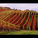 Herbst in der Südpfalz..1..