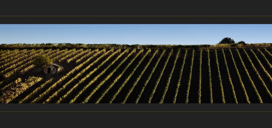 Herbst in der Toscana II