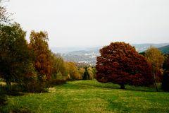 Herbst in der Trupbacher Heide