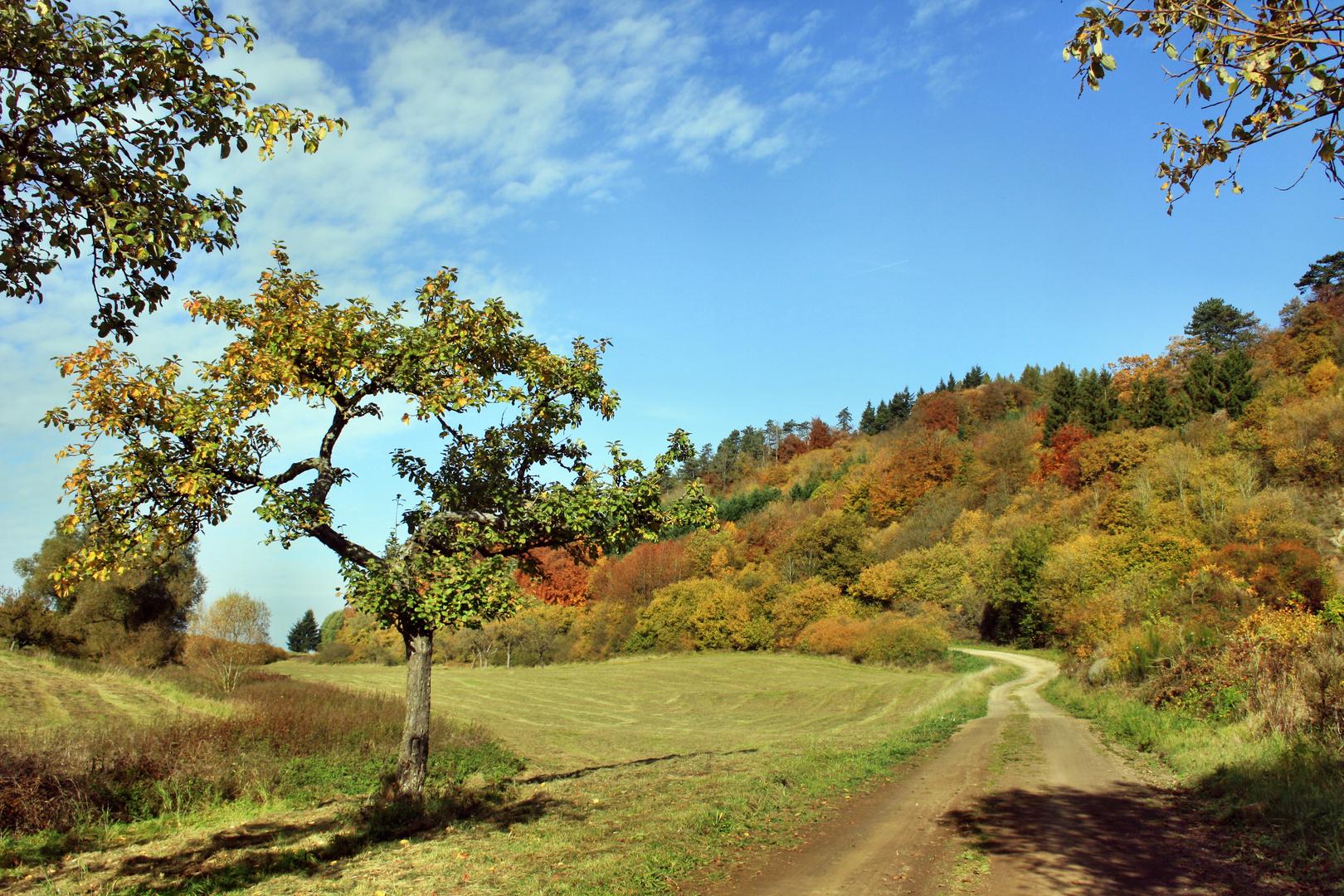 Herbst in der Vulkaneifel !