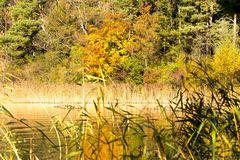 Herbst in der Weissenau ( Thunersee )