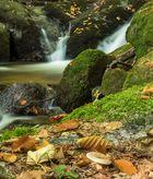 Herbst in der Ysperklamm