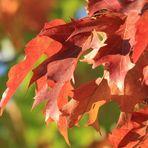 Herbst in Ettingshausen
