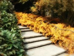 Herbst in Gold...