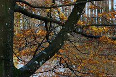 Herbst in Graasten