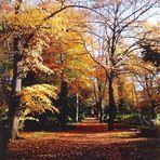 Herbst in Halle