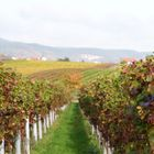 Herbst in Hambach