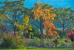 Herbst in Lippe