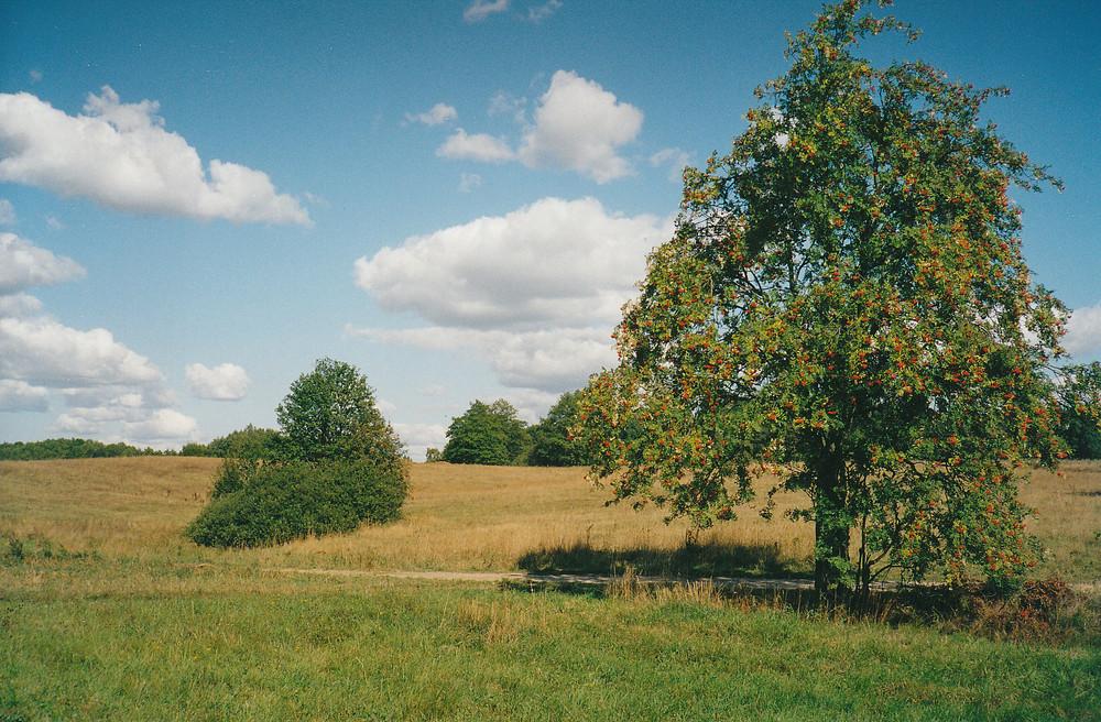 Herbst in Masuren 2