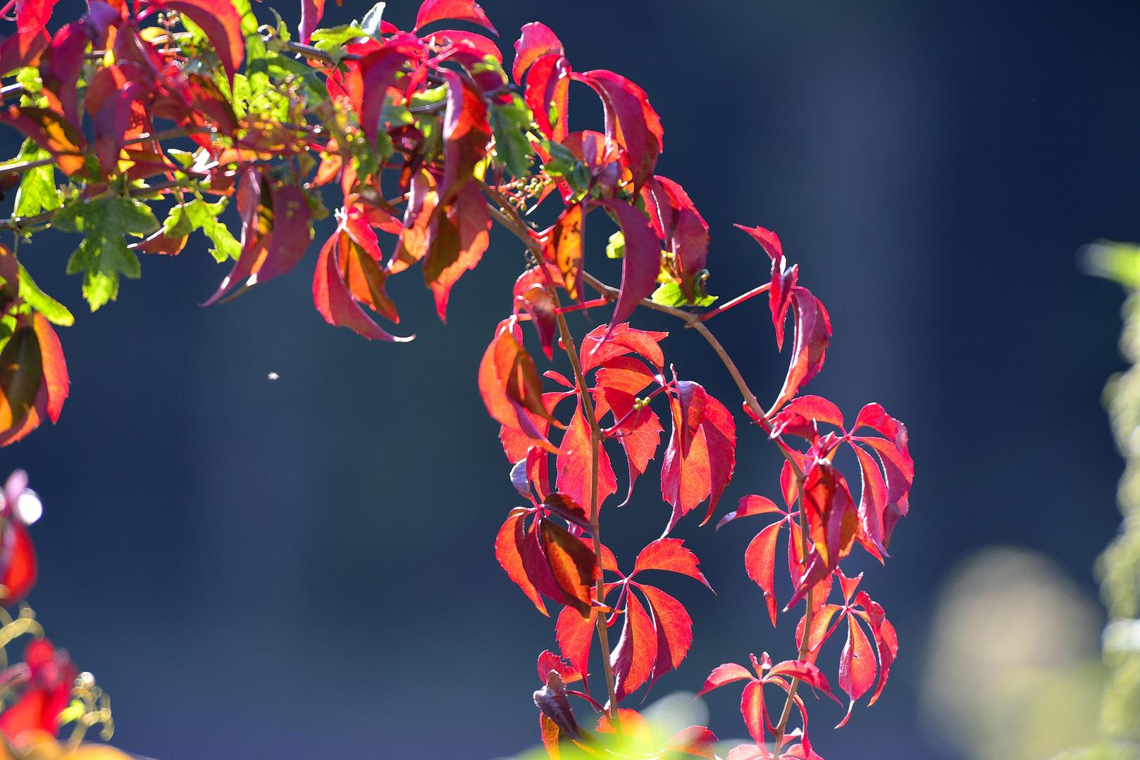 Herbst in meinem Garten