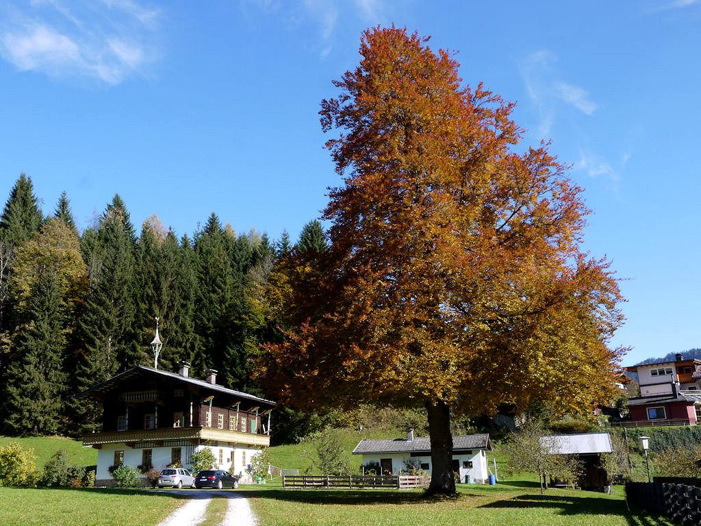Herbst in Mühlbach
