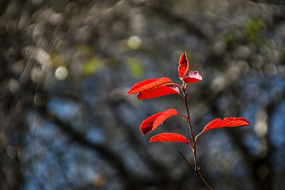 Herbst in Nachbars Garten