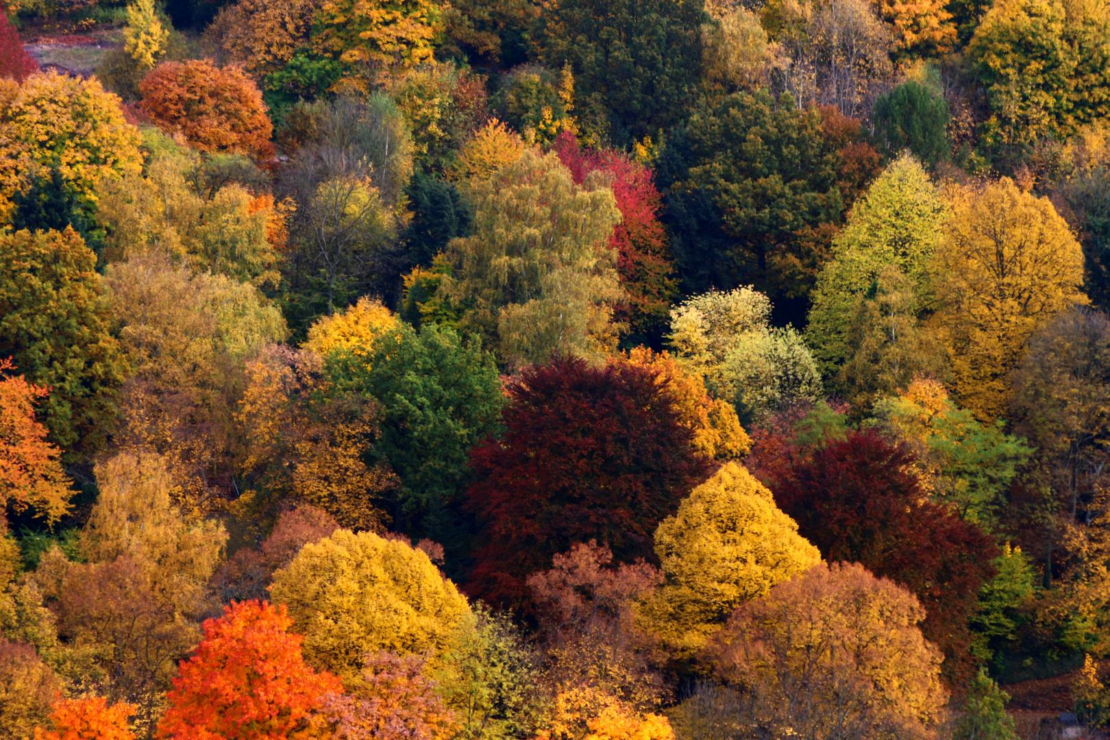 Herbst in NRW