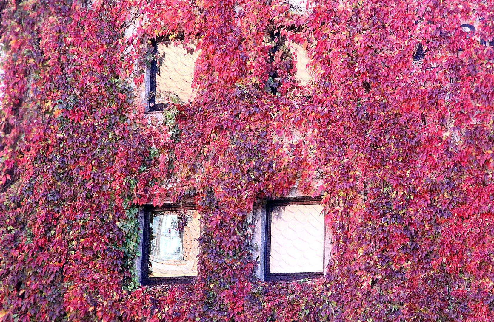 Herbst in Nürnberg 3