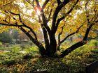 Herbst in Planten und Blomen II