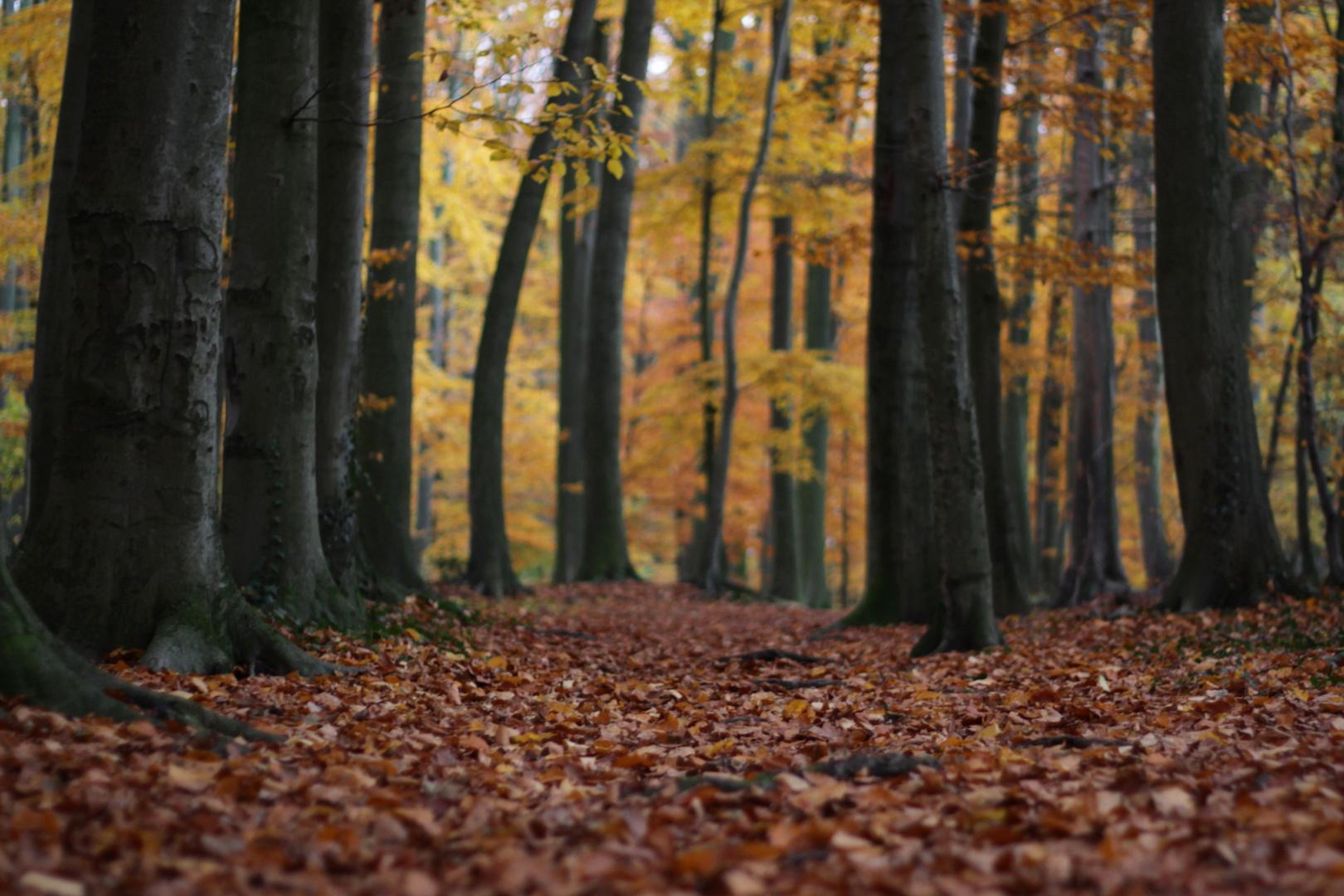 Herbst in Pödinghausen