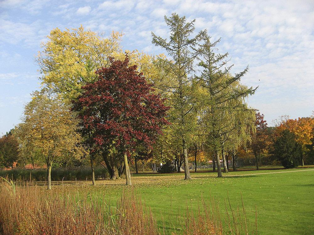 Herbst in Rheine