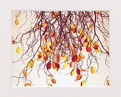 Herbst in schönster Form