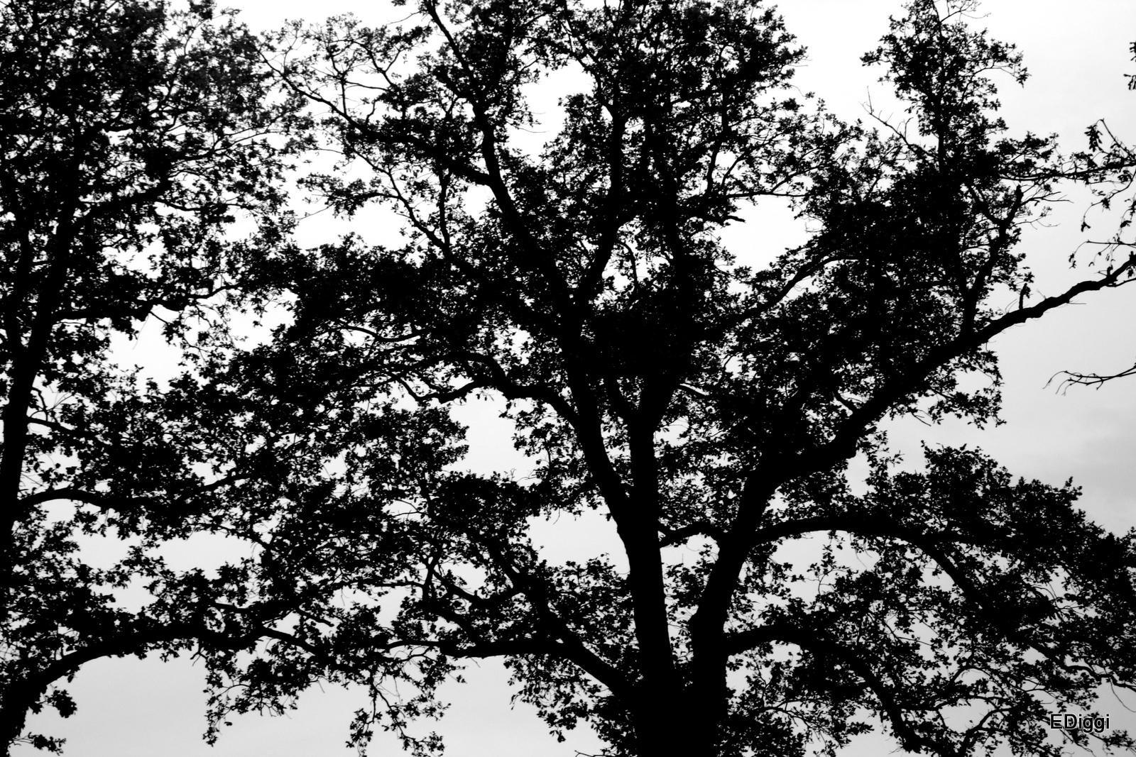 herbst in schwarz wei foto bild pflanzen pilze flechten b ume baumrinden wurzeln. Black Bedroom Furniture Sets. Home Design Ideas