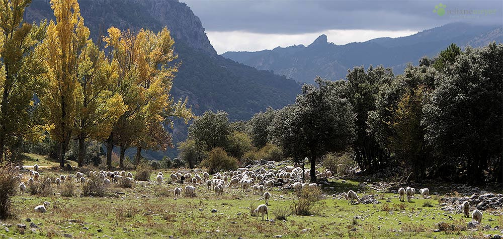 Herbst in Spanien