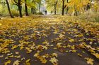 Herbst in Ukraine