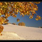 Herbst in White Sands