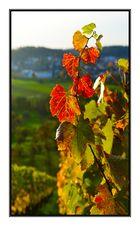 Herbst in Winnenden.....3