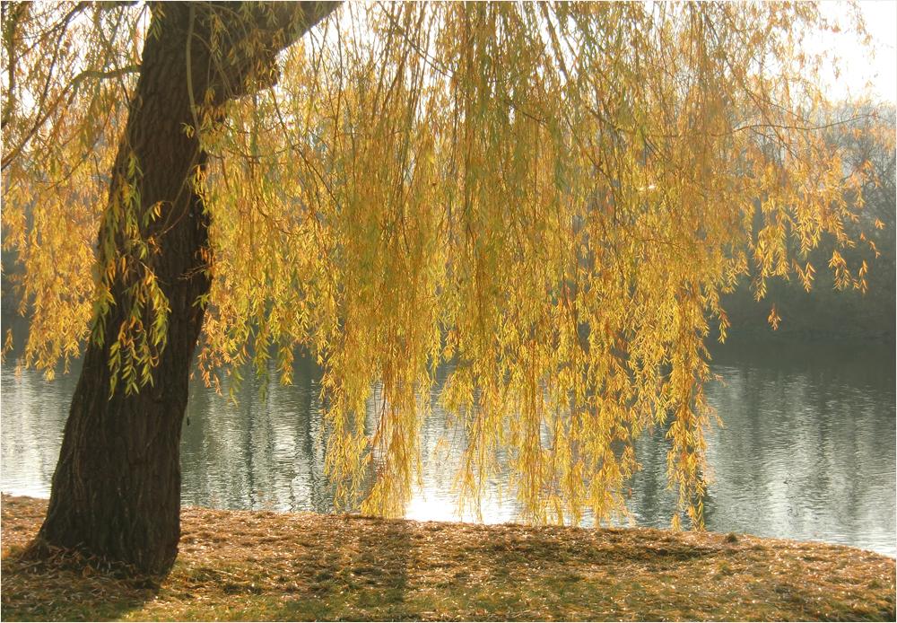 Herbst in Würzburg (23)