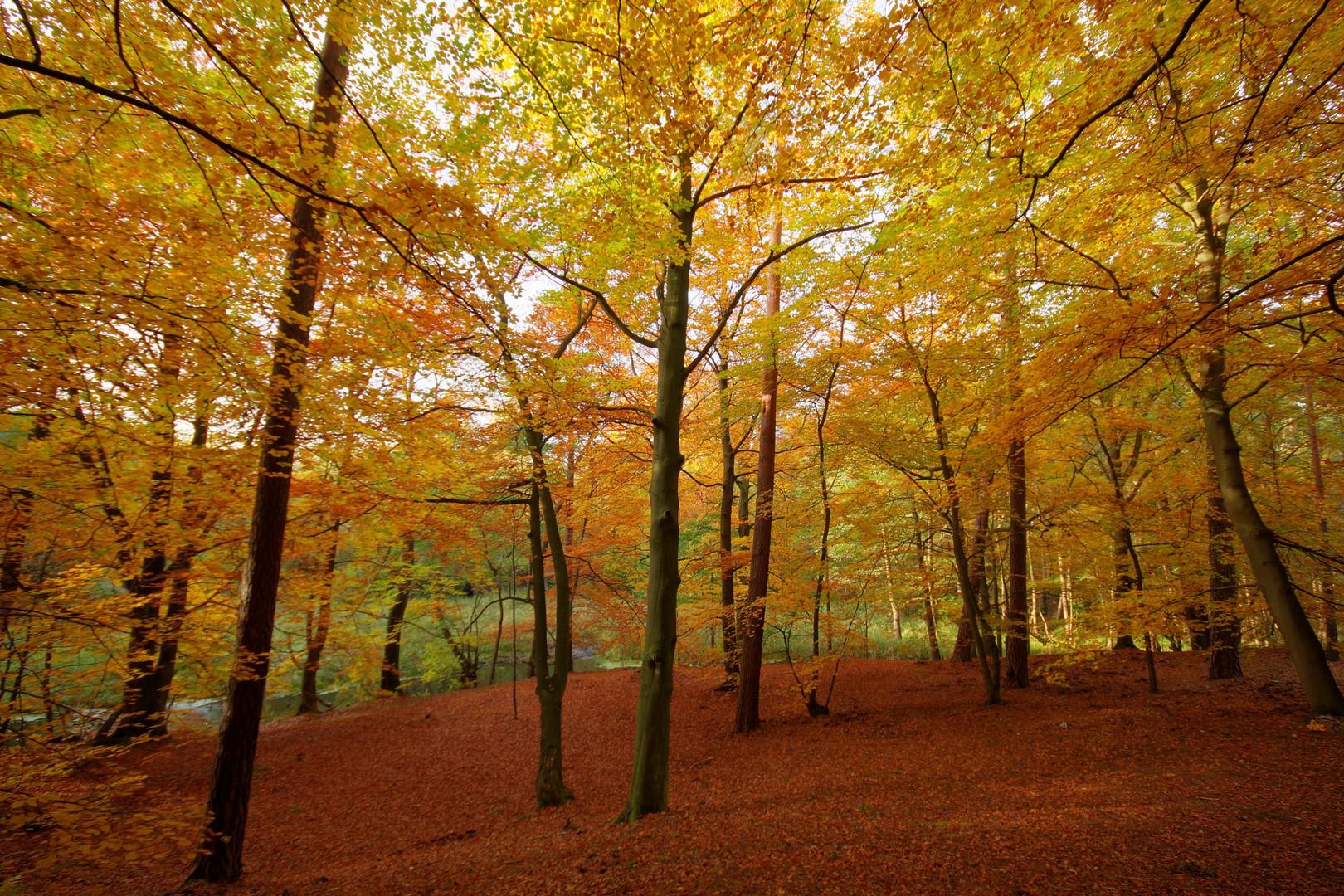 Herbst ist da
