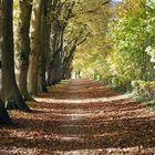 Herbst ist einer der schönsten Jahreszeiten!