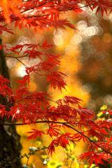 """""""Herbst ist schön """""""
