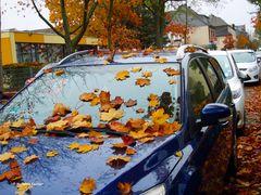 Herbst ist voll uncool - 1 -