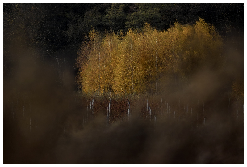 Herbst IX