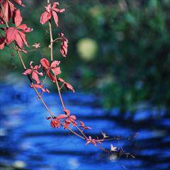 Herbst kann so bunt sein :-)