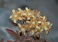 Herbst-Kunst-Farb-Töne... - Une plante minuscule dans son habit d'automne!