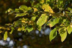 Herbst Laub II