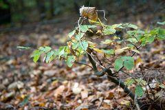 Herbst Laub III