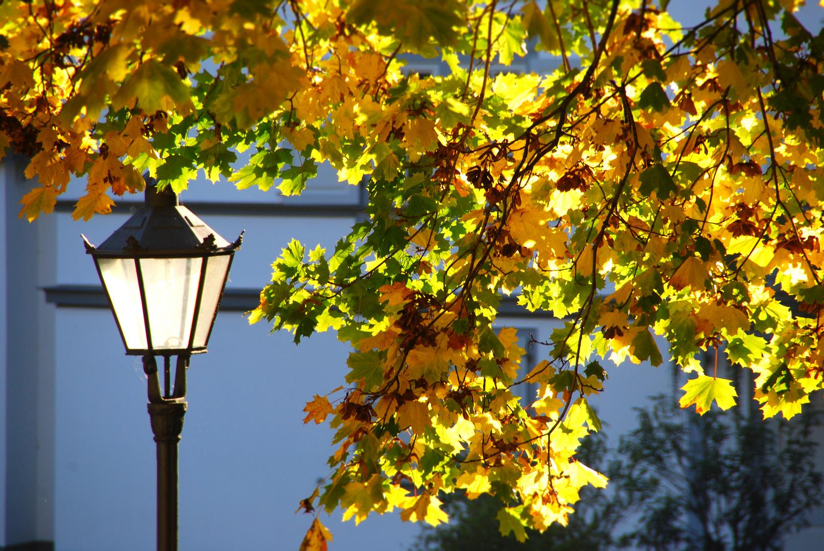 Herbst - Lich(t)