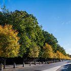 """Herbst Licht """"Contre Jour"""" Dublin."""