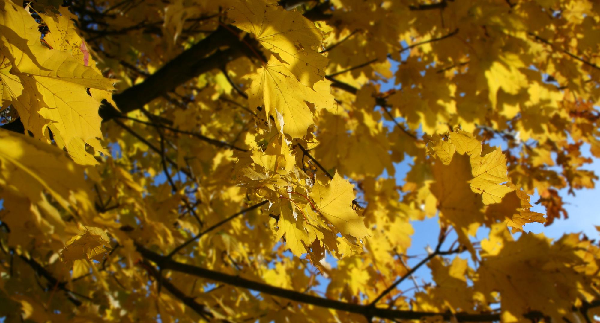 Herbst Lichter